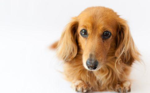 犬にはちみつを与えるときの注意点