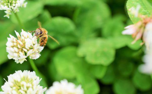 蜂蜜の種類と特徴など代表的なもの7つ