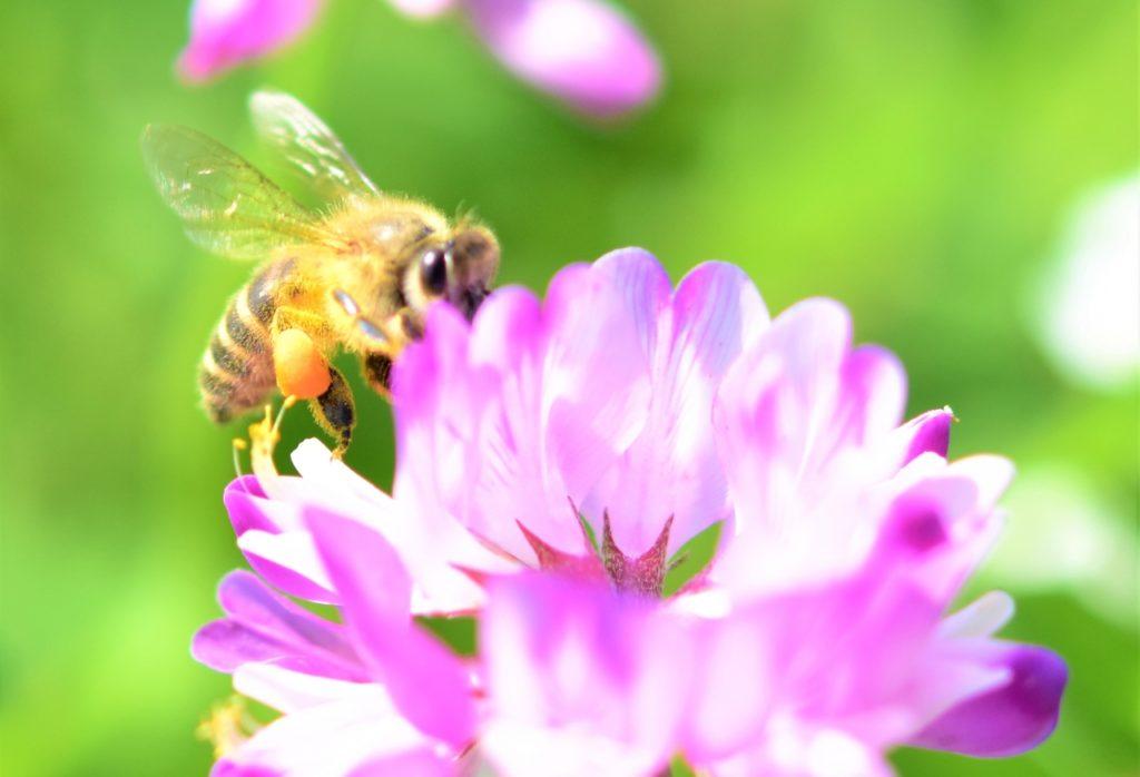 単花蜂蜜の代表的な種類6つ