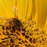 ミツバチとはちみつについて