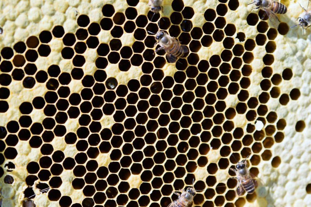はちみつ以外にミツバチがつくるもの
