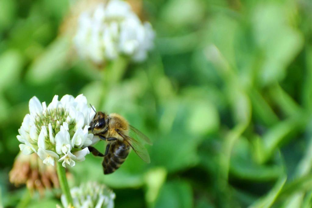 ミツバチは何のためにはちみつをつくるのか