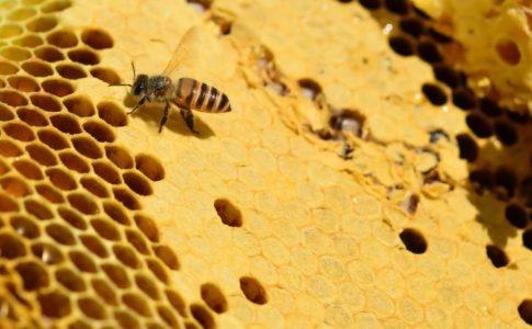 ミツバチが集める蜂蜜の量はどれくらい?