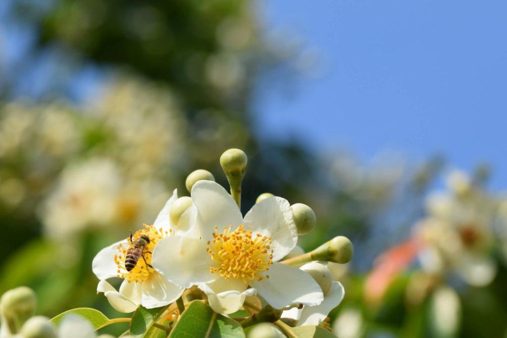 働き蜂の一生
